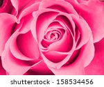 Stock photo pink rose background 158534456