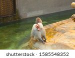 Monkey Concept At The Water\'s...