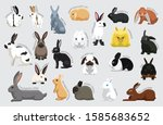 Rabbit Set Various Kind...