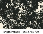 tree and branches silhouette.... | Shutterstock .eps vector #1585787725