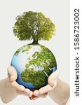 Small photo of Environmental Concept As Hands Hold Globe With Growing Tree