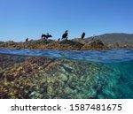 Several Cormorant Birds Resting ...