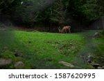 deer stag in autumn forest   Shutterstock . vector #1587620995