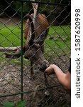 deer eats in autumn forest   Shutterstock . vector #1587620998