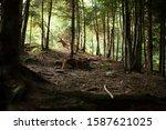 deer stag in autumn forest   Shutterstock . vector #1587621025