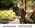 deer eats in autumn forest   Shutterstock . vector #1587621028