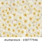 White Daisy Background.
