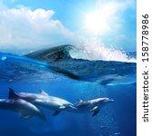 Hawaiian Beautiful Dolphins...