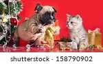 Stock photo kitten and puppy holiday decorations 158790902