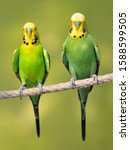 Two Yellow And Green...