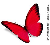 Red Butterfly Flying  Isolated...