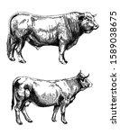 Farm Animals Set Farm Cows...