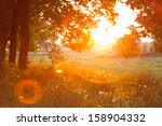Sunset. Forest Glade. The...