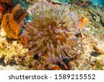 A Beautiful Sea Anemone That...