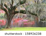Charleston  South Carolina...
