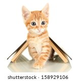 Stock photo cute little red kitten and book isolated on white 158929106