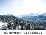 Winter Snow Covered Forest In...
