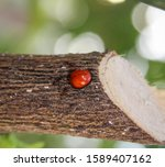 A Close Up Photograph Of A Red...