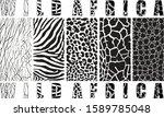 Vector Illustration African...