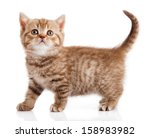 Stock photo kitten on a white background 158983982