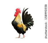 rooster isolated on white... | Shutterstock . vector #158993558