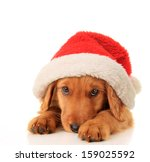 Christmas Puppy Wearing A Sant...