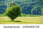Single Tree On A Meadow And...