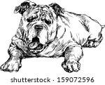 hand drawn english bulldog | Shutterstock .eps vector #159072596