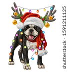 Dog Breed Boston Terrier. Color ...