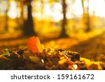 Autumn Oak Leaves In Sunrise...