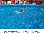 performance of trained dolphins at a show in the dolphinarium, aquarium. cute dolphins dive and show tricks in the blue pool. in the background are spectators, adults and children
