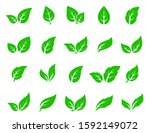 hand drawn veined green leaf... | Shutterstock .eps vector #1592149072