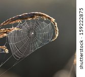 Beautiful Spider Web With Water ...