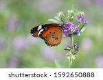 Wildlife Insect Butterfly Close ...