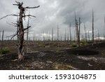 Dead Forest In Dead Lands  Like ...