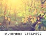 Vintage Photo Of Autumn Leaves