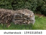 Bug House  Insect Hotel Or...