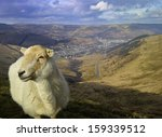 Sheep On Mountain In South Wales
