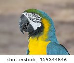 blue yellow macaw south... | Shutterstock . vector #159344846