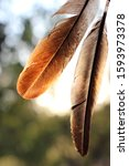 Small photo of Beautiful feather in the natural background.Natural feather in a natural background.