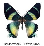 Stock photo beautiful butterfly isolated on a white background 159458366