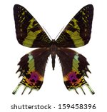 beautiful butterfly isolated on ... | Shutterstock . vector #159458396