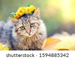 Small photo of Portrait of a cat outdoors in autumn. Cat crowned flower chaplet and lying on yellow fallen leaves