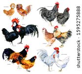 Chicken Breed Collection....