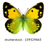 Stock photo dark clouded yellow colias croceus isolated on a white background 159529865