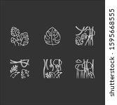 rainforest plants chalk icons... | Shutterstock .eps vector #1595668555