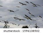 Seagull In Blue Sky Clouds....
