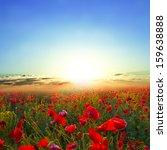 morning red poppy field | Shutterstock . vector #159638888