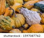 Freshly Harvested Gourds In...