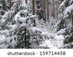 winter landscape of pine... | Shutterstock . vector #159714458